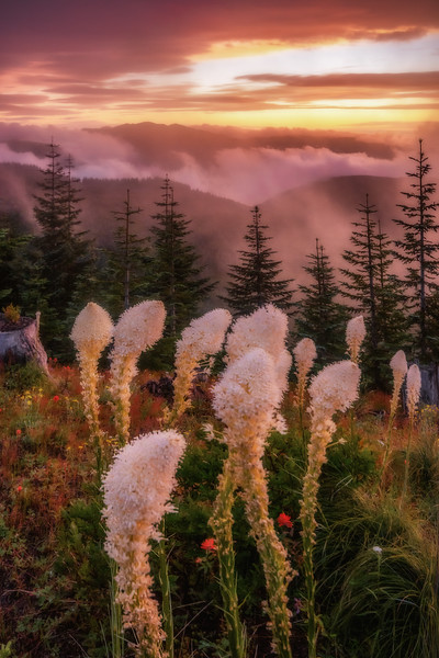 Mt  St  Helens KAR_8014_11765
