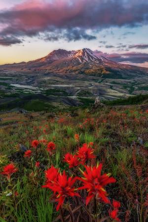 Mt  St  Helens KAR_7203_11007
