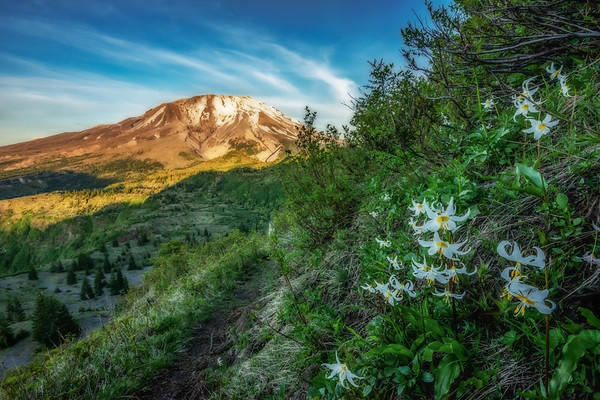 Mt  St  Helens KAR_1128_17133