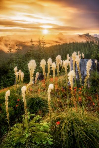 Mt  St  Helens KAR_7973_11724