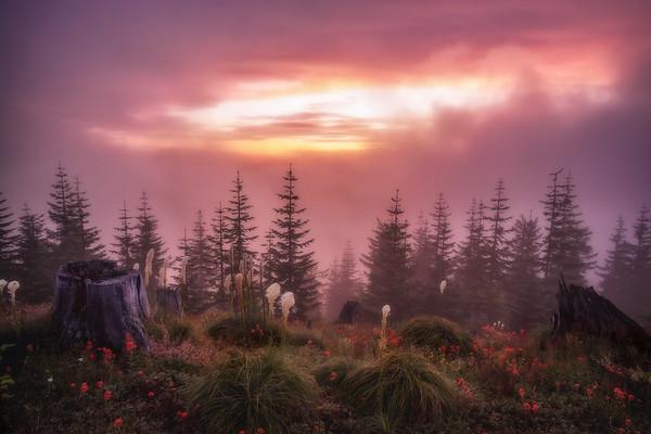 Mt  St  Helens KAR_8018_11769