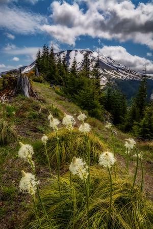 Mt  St  Helens KAR_7306_11110