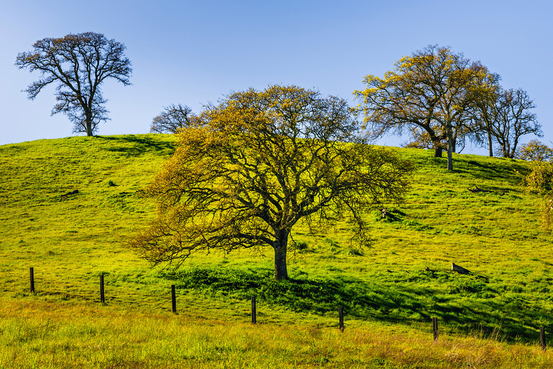 Spring_California-Oaks-Green_Grass-Trees_DSC7416