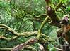 muir, woods, redwood, national park, tree, giant, evergreen, hiking, landsape, mountains, beauty, serene