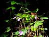 purpleflars-1024