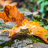 19  G Leaf Close