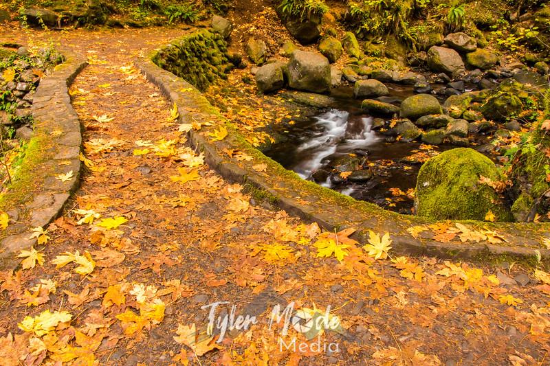 47  G Multnomah Creek Fall Bridge