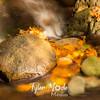 84  G Multnomah Creek Fall