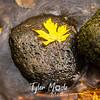78  G Multnomah Creek Leaf Close