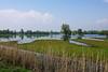Overzicht over het moeras langs de Schouwendijk