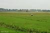 Koeien Munnikenland