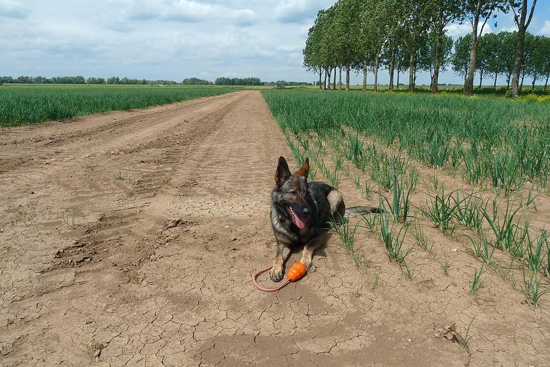 Gina in de polder Munnikenland