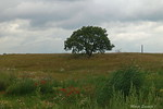 boom munikenland
