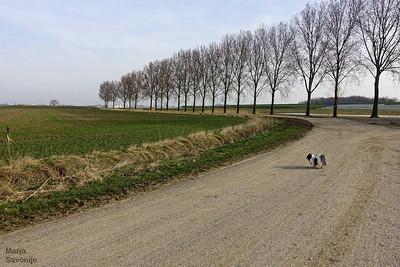Klein hondje in groot landschap