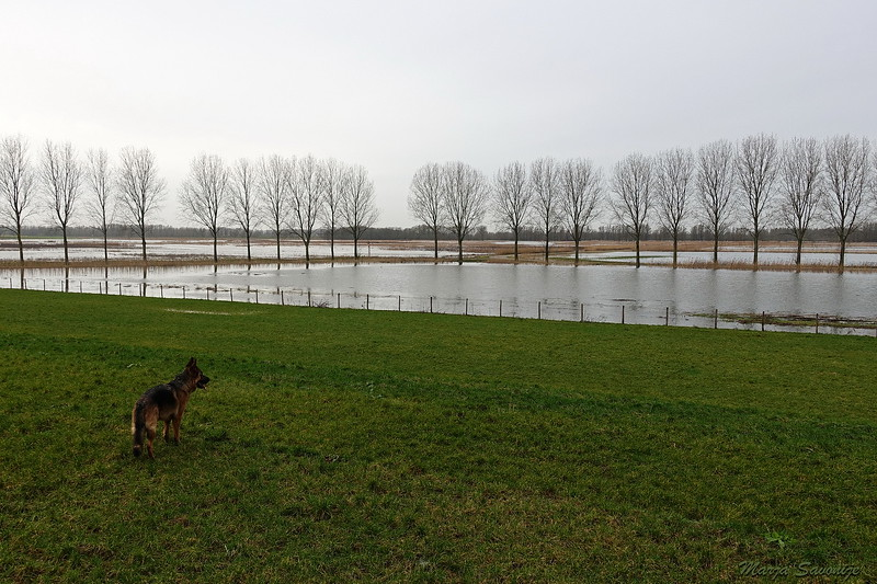 Waterstand 5 januari