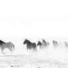 Galloping Dust