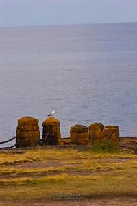Lonesome Gull-1932