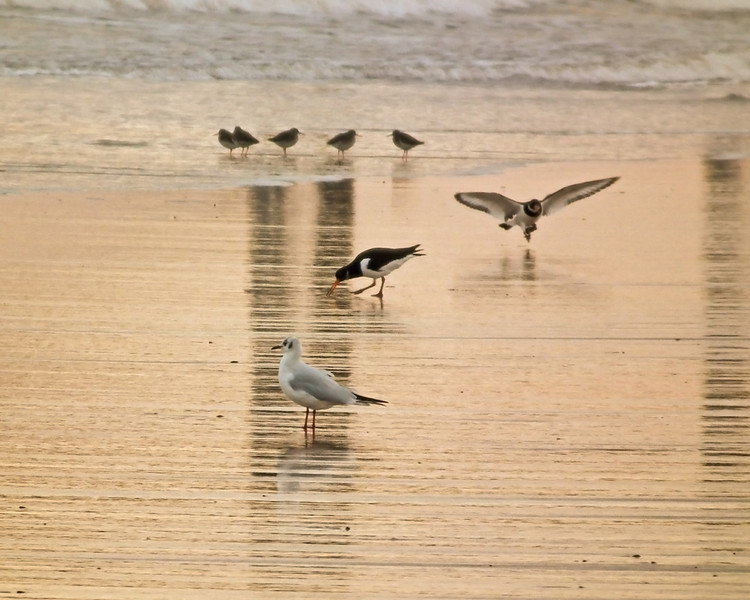 Hartlepool Headland, Steetley Beach
