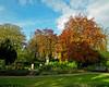 Saltwell Park Trees