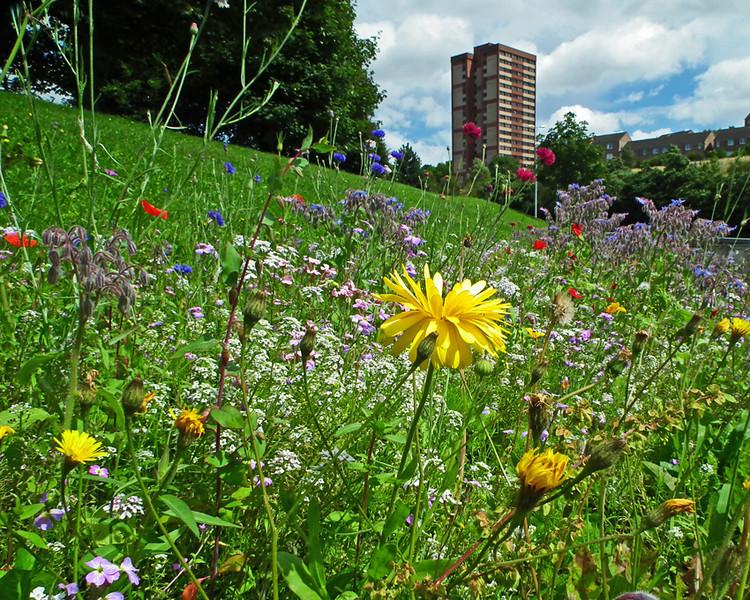 Redheugh Meadow