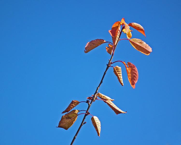 Dunston trees 05