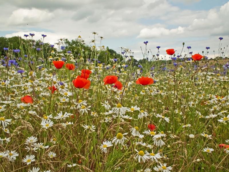 A meadow near Durham city