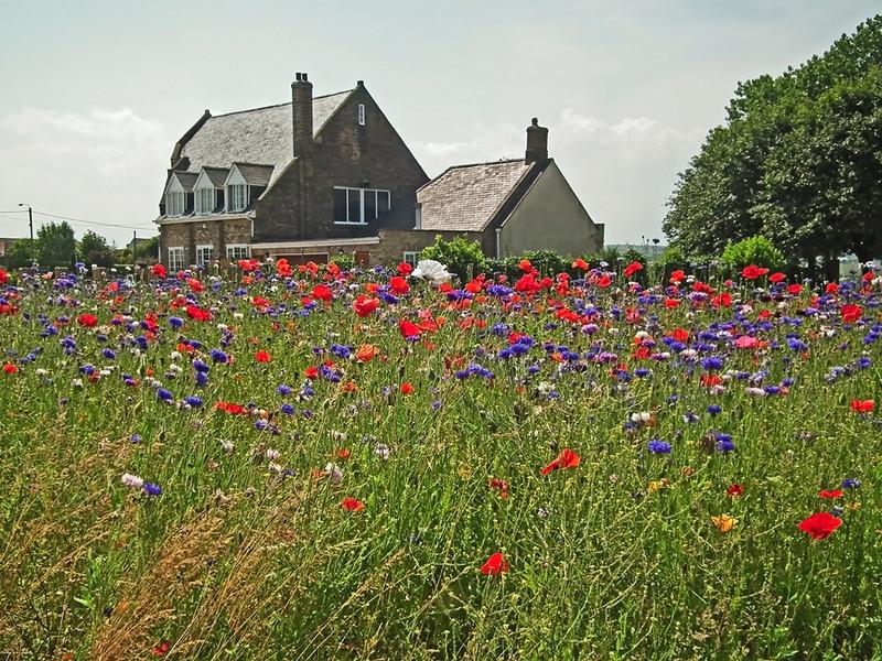 Great Lumley, wild flower garden