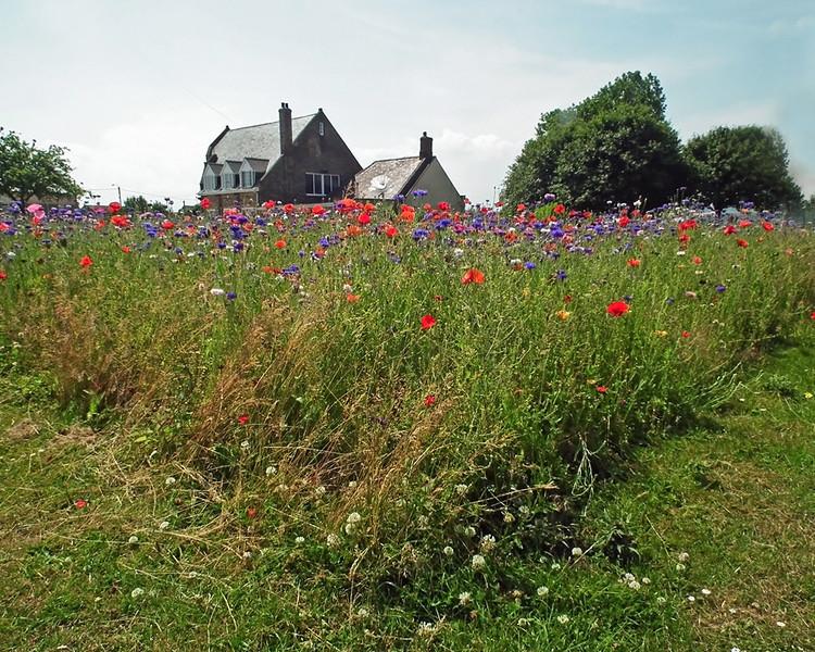 Great Lumley wild flower garden