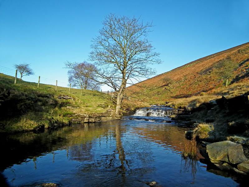 Weardale - above Stanhope and nr Crawleyside bank.