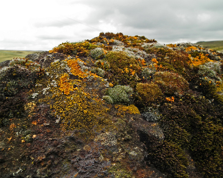 Lichen in a Disused Quarry above Stanhope