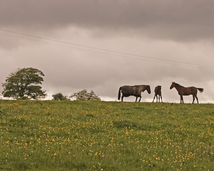 Horses nr Mill House Roundabout
