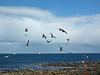Whitley Bay Seagulls