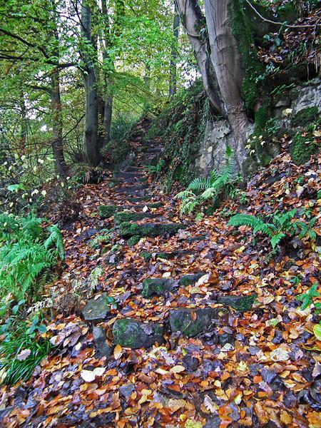 Autumnal steps