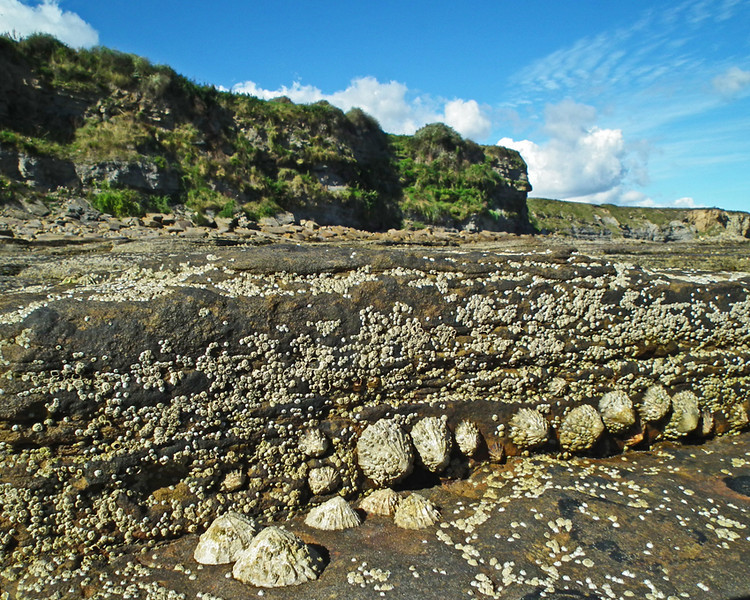 Seaton Delaval Beach, Tyneside 1