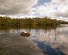 Bolam Lake, Northumberland