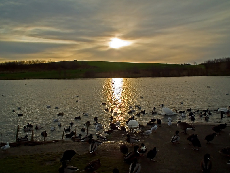 Herrington Park, Penshaw Dec