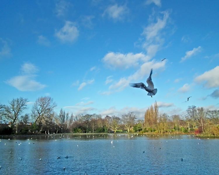 Saltwell Park, Gateshead Dec 2011
