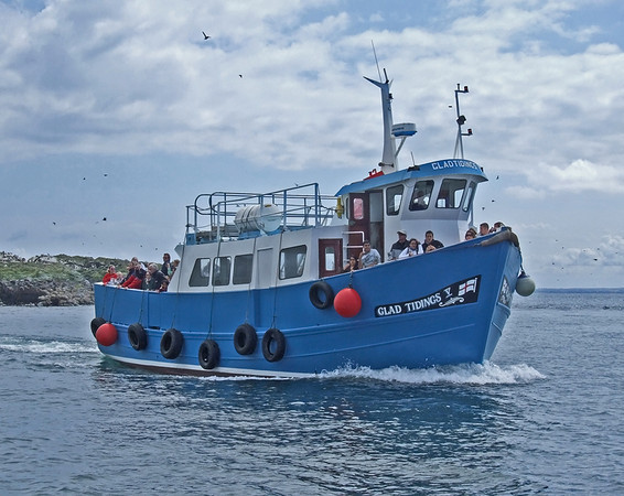Glad Tidings IV Farne Islands
