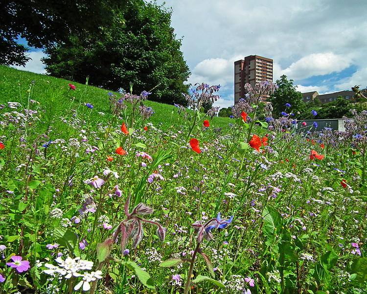 Redheugh Meadow