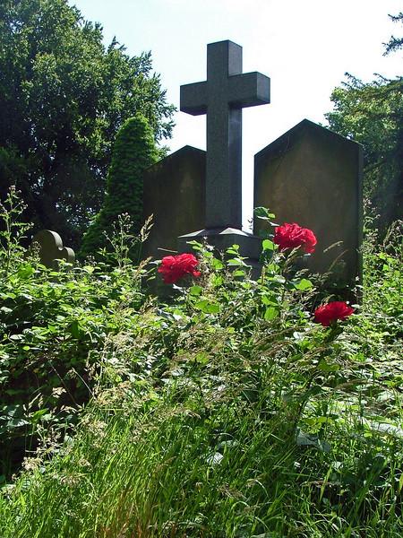 Jesmond Cemetrey roses