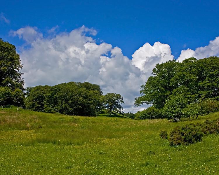 Meadow behind Alnwick Castle