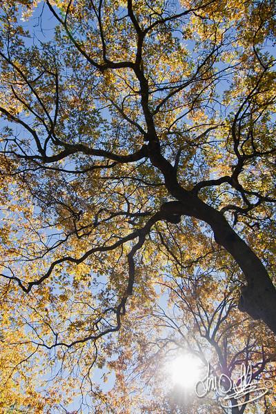 Gazing through the Trees