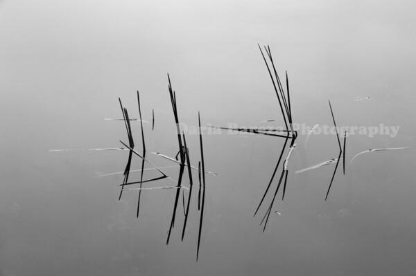 Reeds, Vermont
