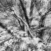 Trees, Sutherland, Scotland