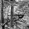 Tree, Scottland