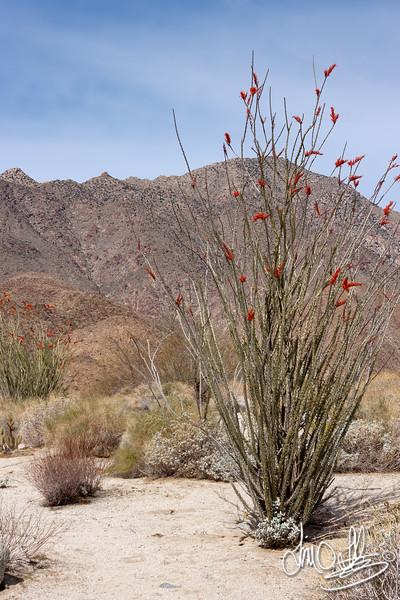 Anza Borrego Desert, CA