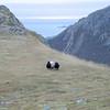 """BLACK AND WHITE<br /> Lots of tings can be spotted along the """"Queen's trail"""" a day in october. Icepatches, surprising glimpses into dark mountain lakes, always new looks to the sea – and sheep. Plump and nice and woolly after months in the rich grass slopes by the sea. <br /> <br /> BLACK AND WHITE<br /> Man treffer så mye forksjellig langs Dronningruta en oktoberdag. Issvuller, overraskende gløtt ned i mørke fjellvann, stadig nye blikk ut mot havet – og sau. Lubne og fine i ulla etter gode måneder i gras-skråningene ved havet."""