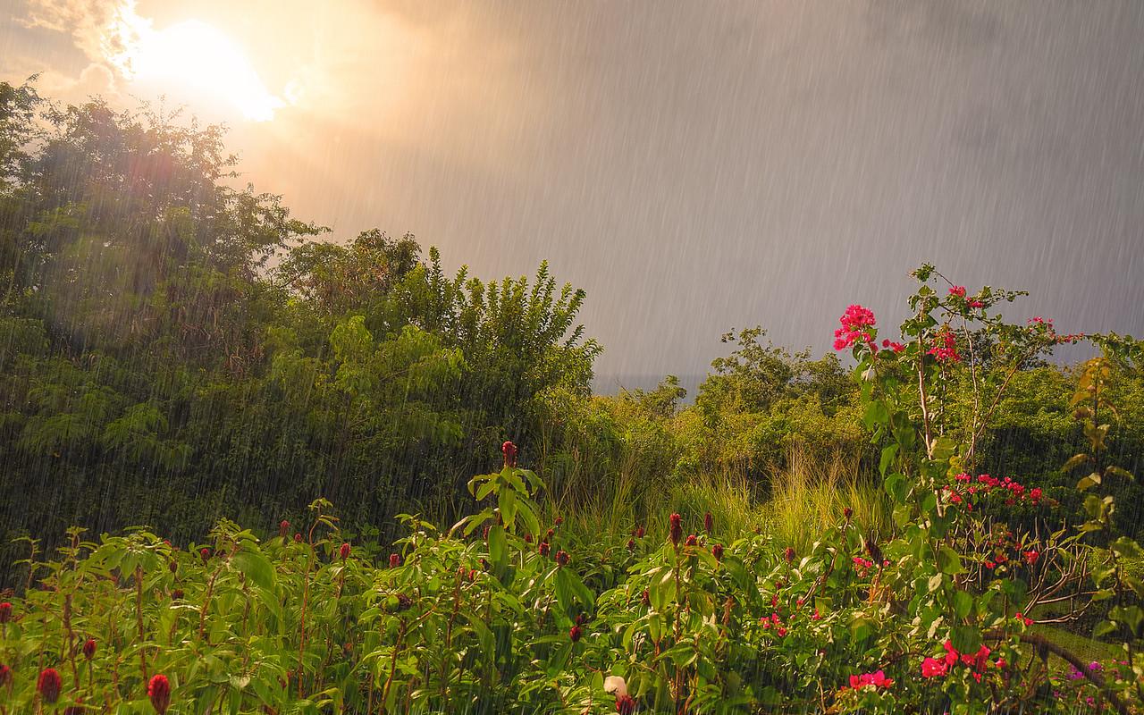 A Rainy Day - Arthur