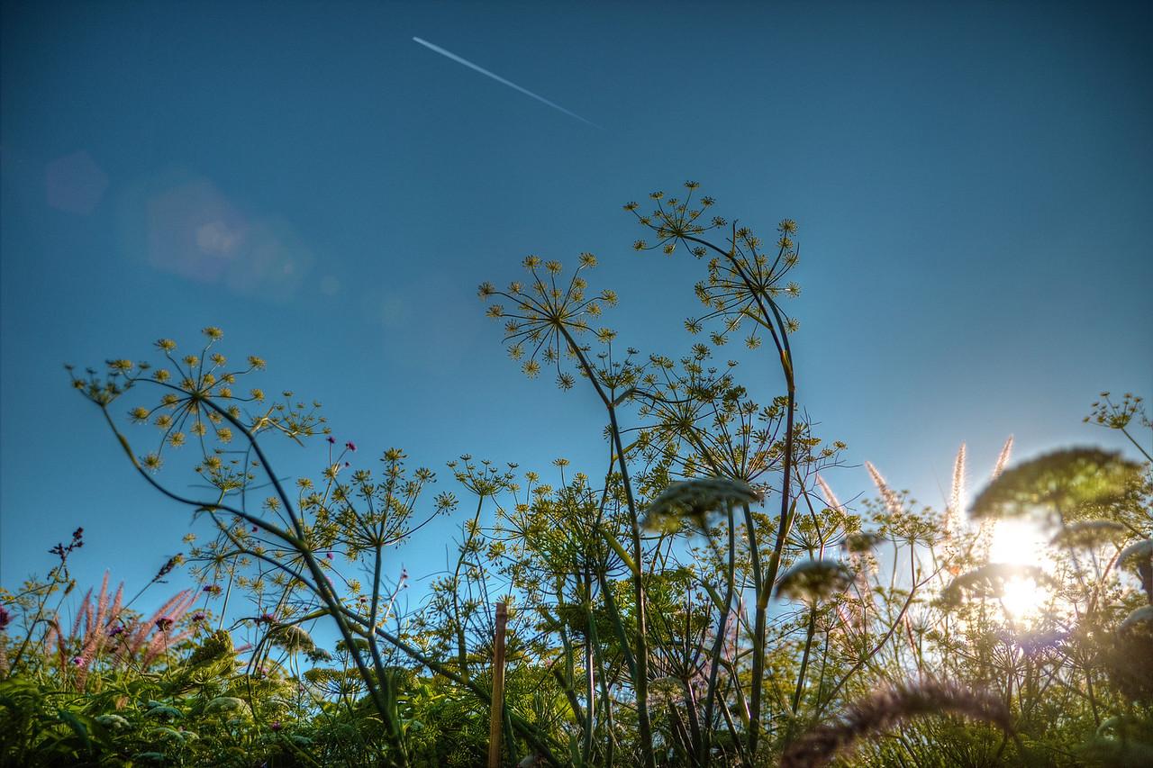 Flower, flare, plane - Stan
