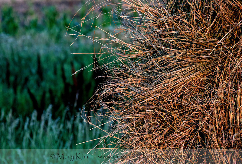 Spikes Of Hay